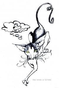Allevamento amatoriale gatto nudo (Peterbald)