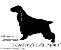Allevamento I Cocker di c.da Palma