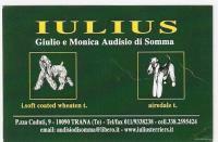 ALL. IULIUS Airedale