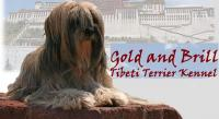 Tibetan terrier- Gold and Brill kennel