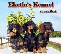 Bassotti - Collie - Australian shepherd Allevamento Eketla 's