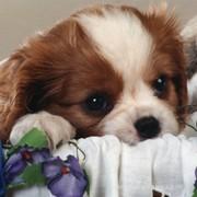 ANIMAL PUPPY