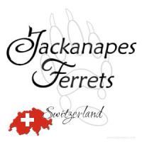 Jackanapes Ferrets