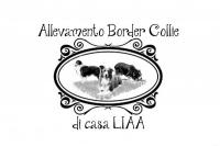 Allevamento Border Collie di casa LIAA