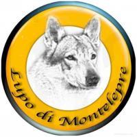 cuccioli di cane lupo cecoslovacco