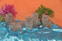 allevamento dei gatti IRYNA 'S PRIDE*IT