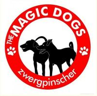allevamento amatoriale di zwergpinscher magic dogs