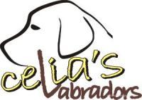 CELIA'S LABRADORS