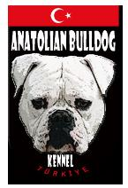 American Bulldog Johnson Type