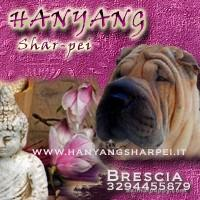 ALL. TO HANYANG SHAR-PEI