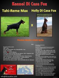 CUCCIOLI DI CASA FOX