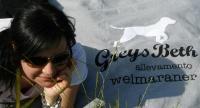 WEIMARANER GreysBeth kennel