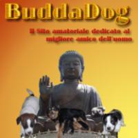 Allevamento Buddadog