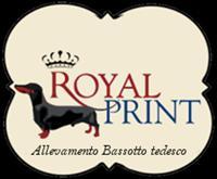 Bassotti Royal Print