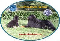 Allevamento riconosciuto ENCI FCI razza Bovaro del Bernese