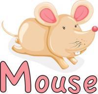 Allevamento Fancy Mice e Fancy Rats