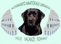 I labrador delle Vacanze Romane