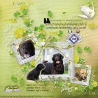 Allevamento Labrador Retrievers EpicMagnaGraecia's