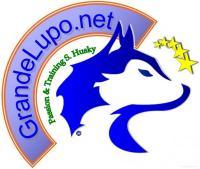 Grande Lupo .net :: Passion and Training Siberian Husky - Barrafranca (En)
