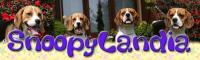 allevamento amatoriale per la selezione del beagle