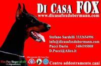 ALLEVAMENTO DI CASA FOX FCI - ENCI - AIAD